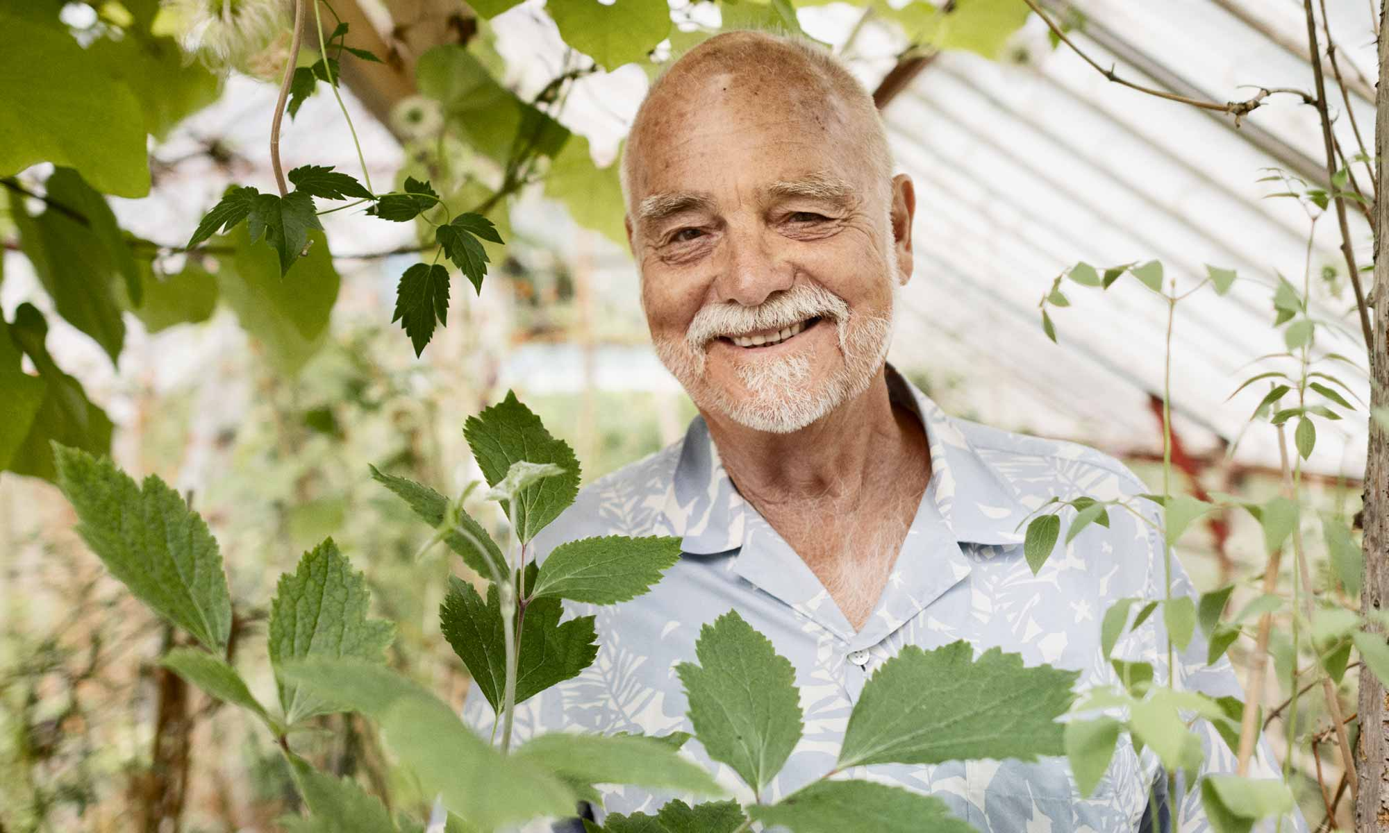 Senior man in greenhouse